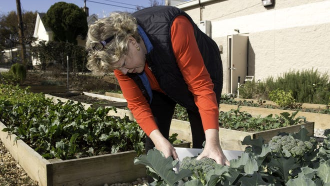 Sally Green cuts broccoli in the garden at 'Project Host,' a soup kitchen in Greenville, S.C.