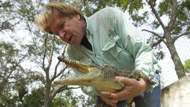 Joe Wasilewski works with a captured Nile crocodile caught near his Homestead, Fla., home.