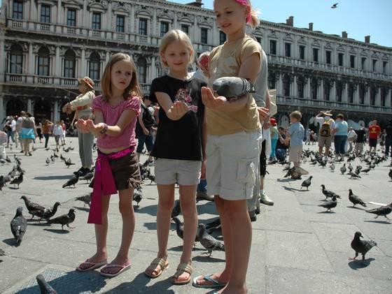 Venice pigeons St. Mark's Square