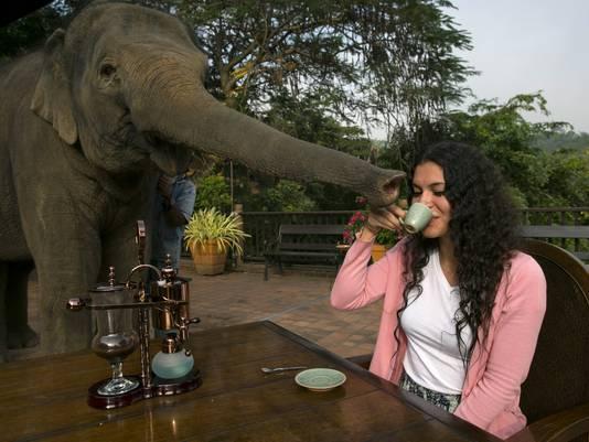 sipping-elephant-dung-coffee-4_3_r536_c534.jpg?1b79b3da202957124496e3768cfb7b67cdb10c81