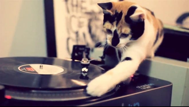 This kitty disc jockey shows you his accomplishments right away. Your favorite cat video can help you hone your LinkedIn profile.