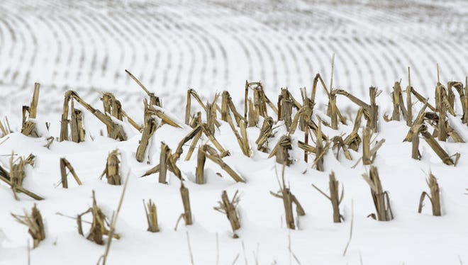 Corn stalks stand in a snowy field near La Vista, Neb., last week. Despite getting some big storms in December, much of the U.S. is still desperate for relief from the nation's longest dry spell in decades.