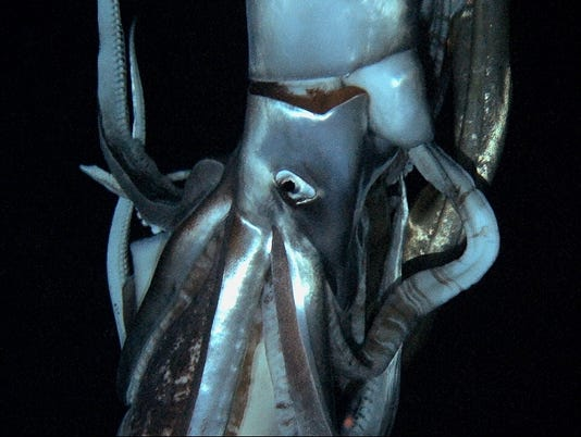 First images of giant squid in the deep are released