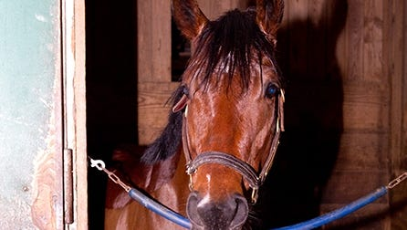 Bullet Catcher, a 4-year-old gelding, got loose and ran a mile and a half down Route 1 in Laurel Md., on Friday morning.