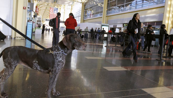 Katie, a bomb-sniffing dog, watches travelers go through the TSA security checkpoint.