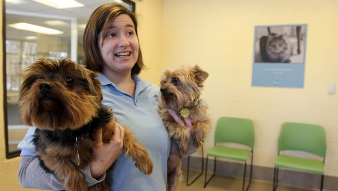 Kate Reiser, assistant adoption manager at the Monmouth County SPCA, says Yorkshire terriers Charlie and Hannah are boarding as their Sea Bright, N.J., owner searches for pet-fiendly housing after superstorm Sandy.