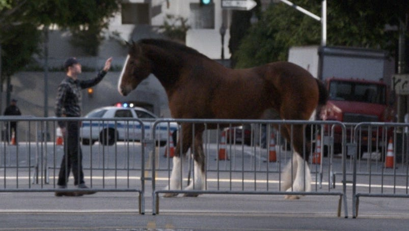 Budweiser S Clydesdale Wins Ad Meter By A Nose