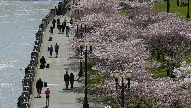 People walk along Tom McCall Waterfront Park as cherry trees blossom near the bank of the Willamette River on March 26, 2012, in Portland, Ore.  It was ranked as one of the 10 best U.S. cities for urban forests in a Feb. 5, 2013, survey by American Forests.