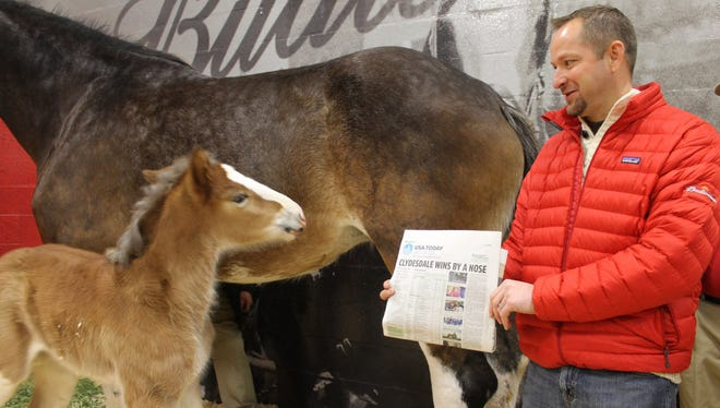 Jeff Knapper, general manager of Budweiser Clydesdale operations, shows the baby foal the USA TODAY headline announcing the winner of the Super Bowl XLVII Ad Meter.