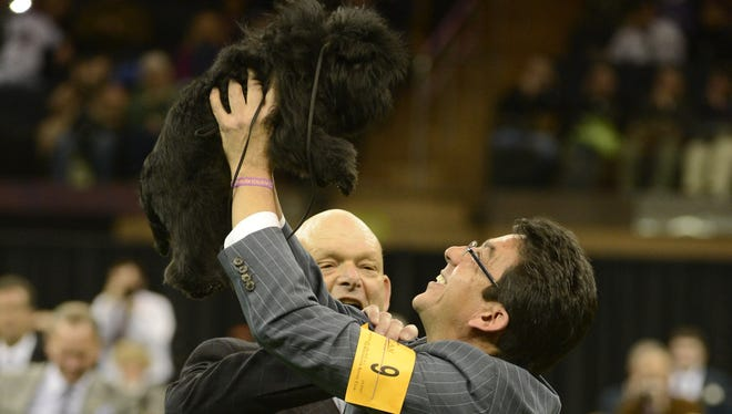 Affenpinscher Banana Joe wins Best In Show at the 137th Westminster Kennel Club dog show at Madison Square Garden. Holding him up is his handler Ernesto Lara.