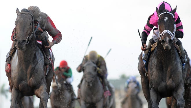 Violence, right, finished just behind Orb, left, on Saturday in the Fountain of Youth stakes at Gulfstream Park. Violence injured his right front ankle (sesamoid).