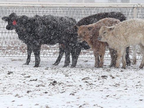 Farmers Almanac 2012 2013 Winter Outlook Snow Forecast 2012   Apps ...