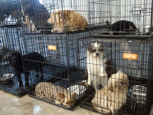 STOP THE MISTREATMENT OF ANIMALS! Ap-puppies-rescued-4_3_r536_c534