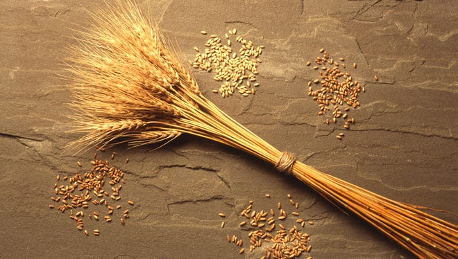 Wheat, one of humanity's staple crops for millennia.