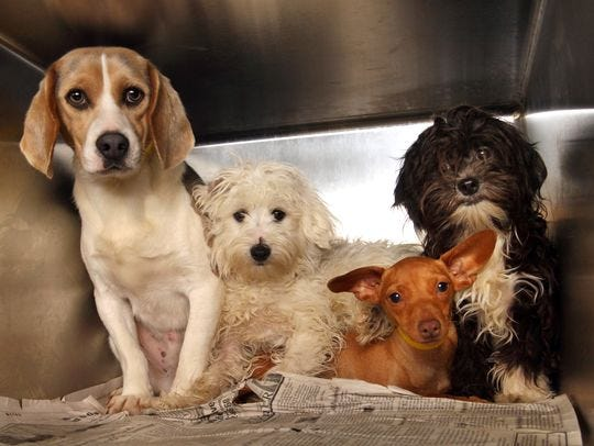 STOP THE MISTREATMENT OF ANIMALS! Yl-puppy-mill-main-4_3_r541_c540