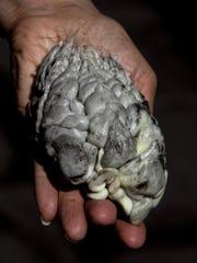 huitlacoche - DO NOT OVERWRITE