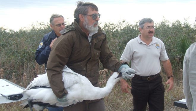 In 2008, whooping crane expert Tom Stehn transported an emaciated whooping crane to receive emergency care at the Dunham Bay area of Aransas National Wildlife Refuge in Texas. The endangered bird died on its way.