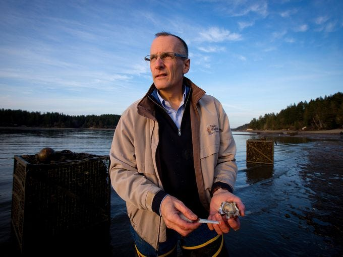 Bill Dewey of Taylor Shellfish Farms, in Shelton, Wash., shucks a freshly harvested Pacific oyster. Plumes of acidic water from the deep ocean threaten the growth of very young oysters.