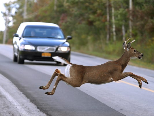 Deer roadkill