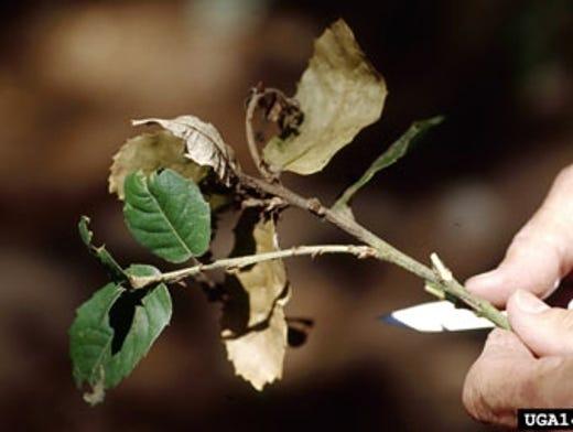 Invasive pests cost Americans millions