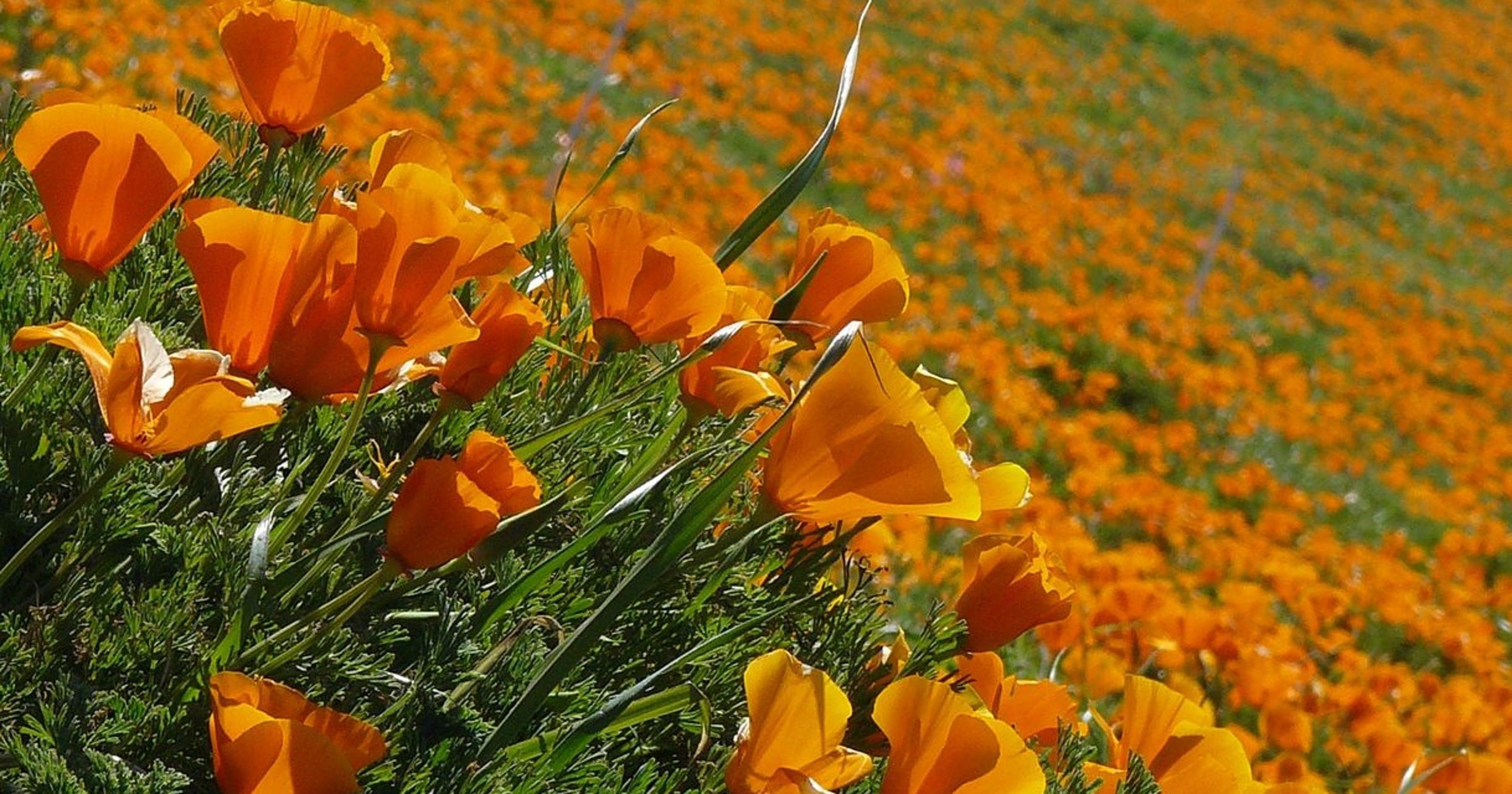 Worlds Most Romantic Flower Fields