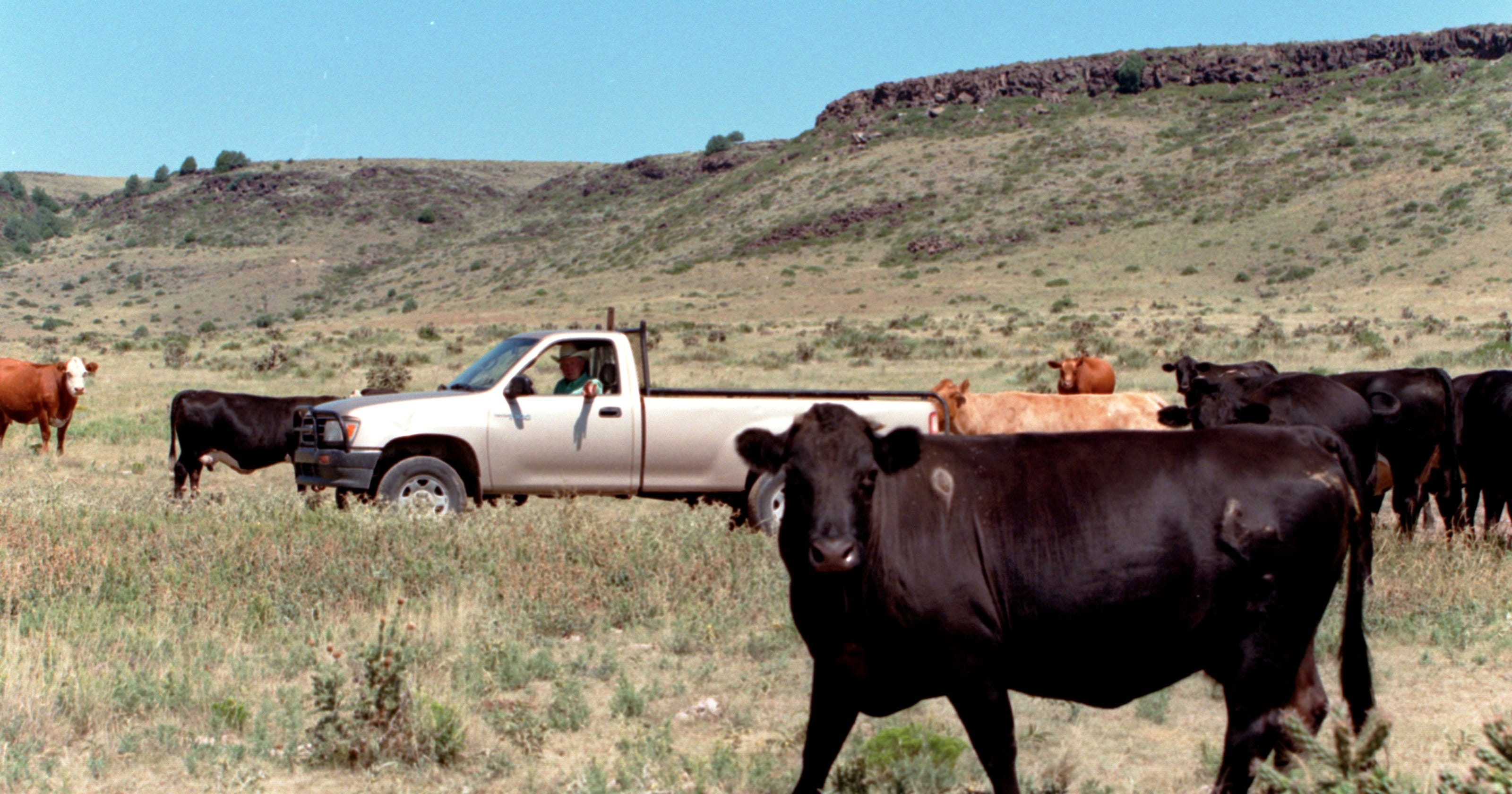 Cattle thefts spur new interest in livestock branding