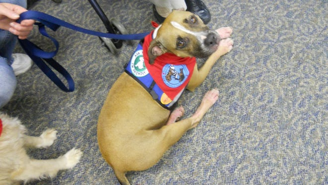 After Perry, Iowa, removed its dog breed ban, pit bull dogs were able to visit a Perry nursing home.