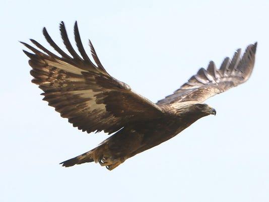 GAN GOLDEN EAGLE 053013