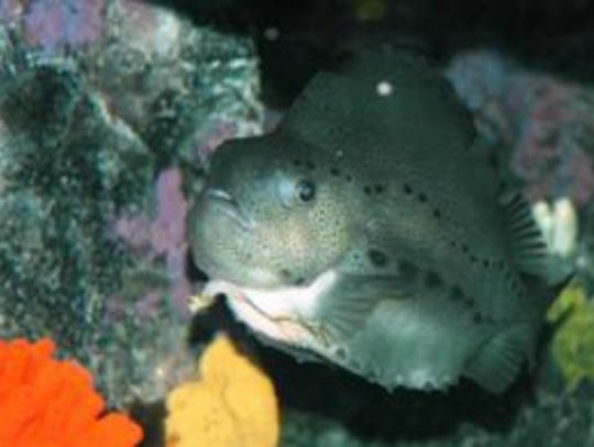 national aquarium DON'T OVERWRITE