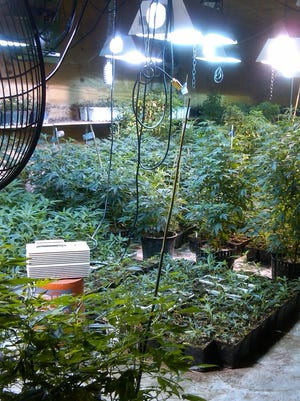 Hydrophonic marijuana and growing equipment seized from inside a Queens warehouse allegedly operated by Andrea Sanderlin, a Scarsdale, N.Y., mother of two.