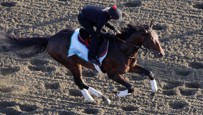 Kentucky Derby winner Orb gallops on the track during a morning workout at Belmont Park on Wednesday. He was named the 3-1 morning-line favored for the Belmont Stakes
