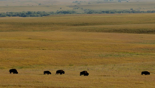 Bison graze at the Tallgrass Prairie National Preserve near Strong City, Kan. The 11,000-acre preserve gives tourists a glimpse of what settlers on the Kansas prairie would have seen.