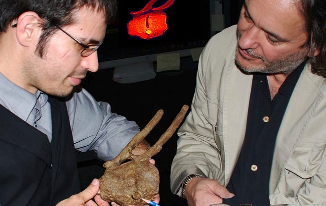Robert A. DePalma II, left,  and David A. Burnham examine a Tyrannosaurus rex tooth crown embedded between hadrosaur vertebrae and surrounded by bone overgrowth.