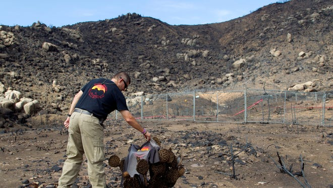Darrell Willis, division chief of the Prescott, Ariz., Fire Department, touches a Granite Mountain Hotshots T-shirt laying on a cactus July 23, 2013, just in front of the site where 19 firefighters died June 30, 2013, fighting the Yarnell Hill Fire.