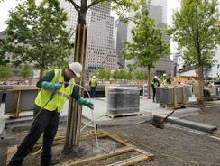 Arborist Jeremy DeSimone sprays fertilizer on a white oak at the September 11 Memorial at the World Trade Center site in New York.