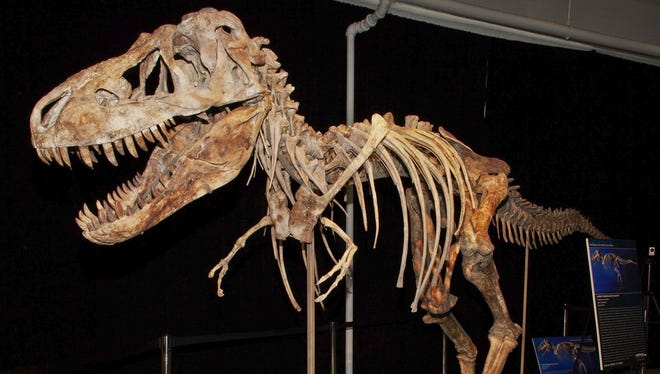 This photo released by the U.S. Attorney's office shows the fossil of a Tyrannosaurus bataar dinosaur at the center of a lawsuit demanding its return to Mongolia.