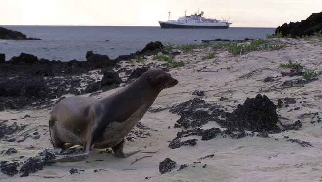 Naturalists lead expeditions to see sea lions, penguins, sea turtles and birds.