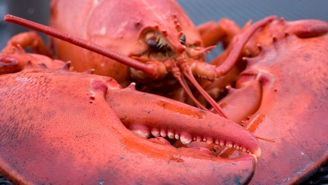 A lobster is seen in this May 4, 2008, photo.