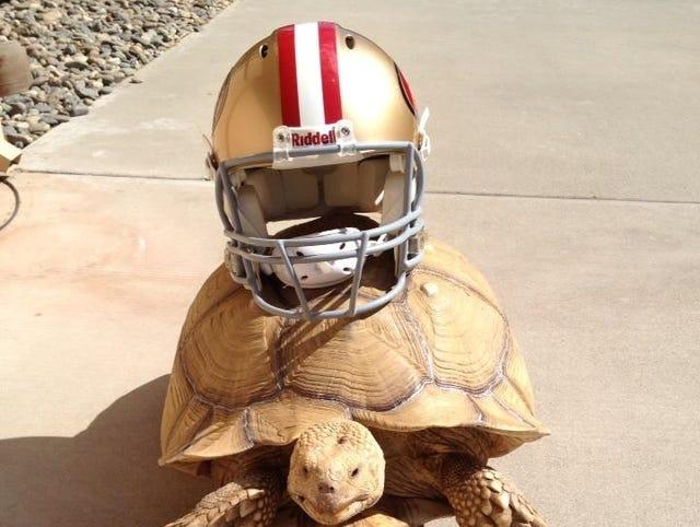 Colin Kaepernick Owns A 100 Pound Tortoise