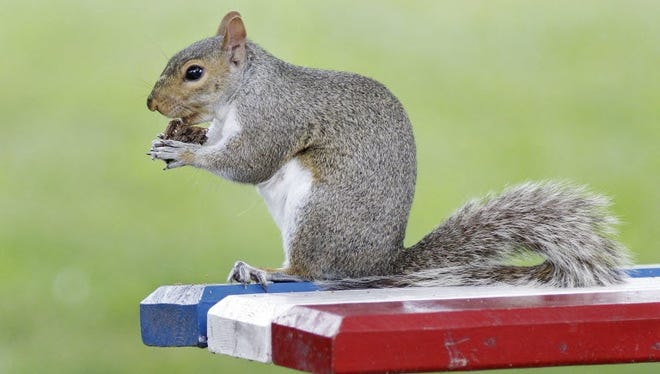 A squirrel infected by the bubonic plague was discovered in Southern California's Angeles National Park on July 16.