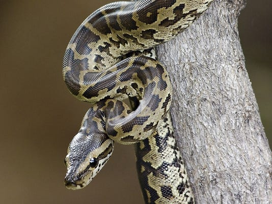 Python strangles 2 boys, 5 and 7, in their sleep in New