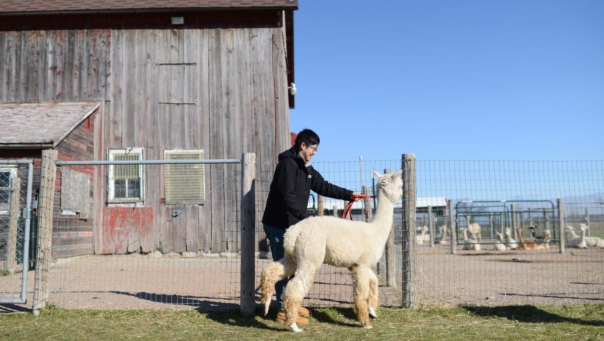 From an alpaca ranch to a cranberry bog, these Wisconsin farms welcome visitors