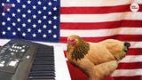 This patriotic chicken knows how to play 'The Star Spangled Banner' on the keyboard.