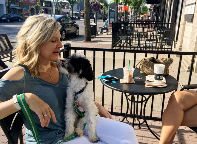Bandit the cockapoo hangs out with his owner Sandra Sanford as they sit on the patio at Starbucks, located on S. Main St. in Royal Oak on July 12, 2018.
