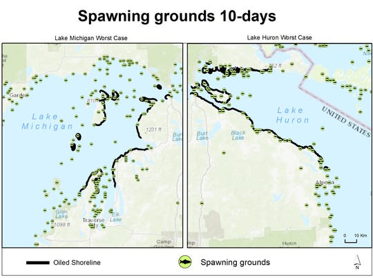 A diagram from a Michigan Technological University report shows how a worst-case scenario spill from Enbridge Line 5 would affect shorelines and spawning sites of fish in either Lake Huron or Lake Michigan, depending on the circumstances of the spill.