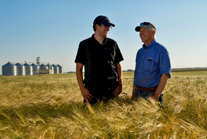 With Coors elevators behind them, Phil Pfeifle, right, and his son Ryan stand among barley on their 103-year-old dryland farm in Power. They also grow wheat, chickpeas and lentils, and last year also raised canola and durum. Ryan is launching a craft malting operation at the farm in hopes of inspiring craft brewers to experiment with barley as the next progression in craft beers.