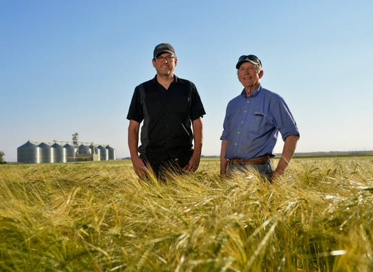 With Coors elevators behind them, Phil Pfeifle, right, and his son Ryan stand among barley on their 103-year-old dryland farm in Power. They also grow wheat, chickpeas and lentils, and last year also raised canola and durum.