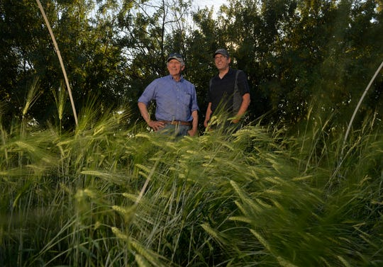 Phil Pfeifle, left, with his son Ryan on their 103-year-old dry land farm in Power.  Ryan is launching a craft malting operation at the farm in hopes of inspiring craft brewers to experiment with barley as the next progression in craft beers.