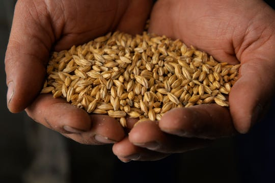 Ryan Pfeifle holds malted barley at his craft malting operation based at his family's 103-year-old dry land farm in Power.