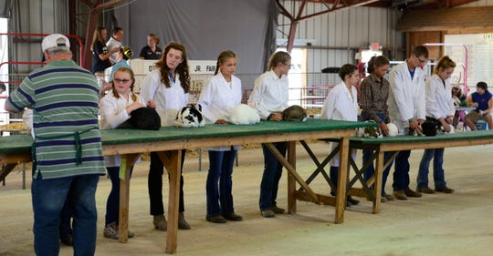 Rabbit judging at the Ottawa County Fair in 2018.